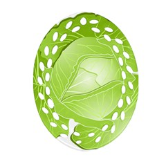 Cabbage Leaf Vegetable Green Oval Filigree Ornament (two Sides) by Mariart