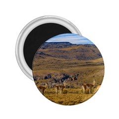 Group Of Vicunas At Patagonian Landscape, Argentina 2 25  Magnets by dflcprints