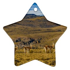 Group Of Vicunas At Patagonian Landscape, Argentina Ornament (star) by dflcprints