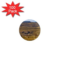 Group Of Vicunas At Patagonian Landscape, Argentina 1  Mini Magnets (100 Pack)  by dflcprints