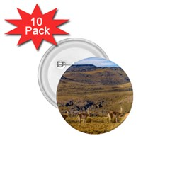 Group Of Vicunas At Patagonian Landscape, Argentina 1 75  Buttons (10 Pack) by dflcprints