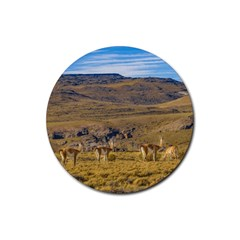 Group Of Vicunas At Patagonian Landscape, Argentina Rubber Round Coaster (4 Pack)  by dflcprints