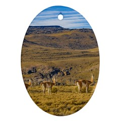 Group Of Vicunas At Patagonian Landscape, Argentina Oval Ornament (two Sides) by dflcprints