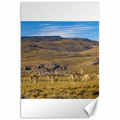 Group Of Vicunas At Patagonian Landscape, Argentina Canvas 20  X 30   by dflcprints