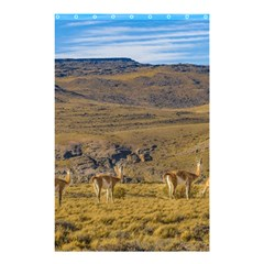 Group Of Vicunas At Patagonian Landscape, Argentina Shower Curtain 48  X 72  (small)  by dflcprints