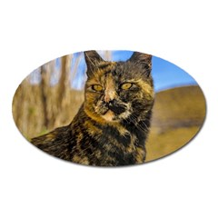 Adult Wild Cat Sitting And Watching Oval Magnet by dflcprints