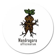 Mandrake Plant Magnet 5  (round) by Valentinaart