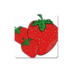 Strawberry Holidays Fragaria Vesca Square Magnet by Nexatart