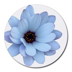 Daisy Flower Floral Plant Summer Round Mousepads