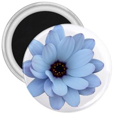 Daisy Flower Floral Plant Summer 3  Magnets by Nexatart