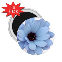 Daisy Flower Floral Plant Summer 2 25  Magnets (10 Pack)  by Nexatart