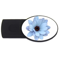 Daisy Flower Floral Plant Summer Usb Flash Drive Oval (4 Gb) by Nexatart