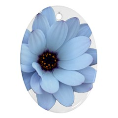 Daisy Flower Floral Plant Summer Oval Ornament (two Sides) by Nexatart