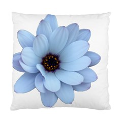 Daisy Flower Floral Plant Summer Standard Cushion Case (two Sides) by Nexatart