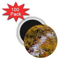 Colored Forest Landscape Scene, Patagonia   Argentina 1 75  Magnets (100 Pack)  by dflcprints