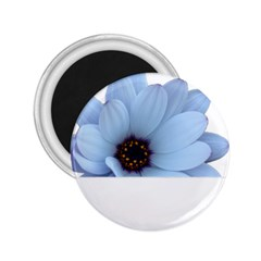 Daisy Flower Floral Plant Summer 2 25  Magnets by Nexatart