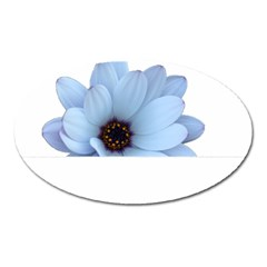 Daisy Flower Floral Plant Summer Oval Magnet by Nexatart