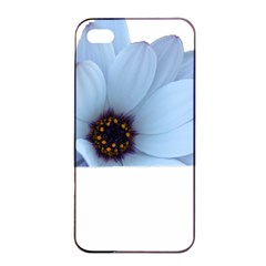 Daisy Flower Floral Plant Summer Apple Iphone 4/4s Seamless Case (black)