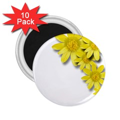 Flowers Spring Yellow Spring Onion 2 25  Magnets (10 Pack)