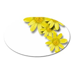 Flowers Spring Yellow Spring Onion Oval Magnet by Nexatart