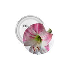 Flower Blossom Bloom Amaryllis 1 75  Buttons