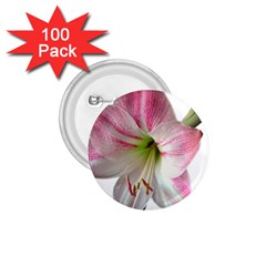 Flower Blossom Bloom Amaryllis 1 75  Buttons (100 Pack)