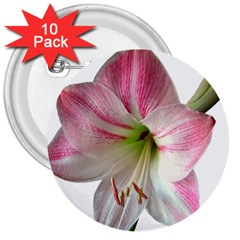 Flower Blossom Bloom Amaryllis 3  Buttons (10 Pack)