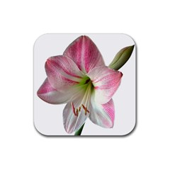 Flower Blossom Bloom Amaryllis Rubber Coaster (square)  by Nexatart