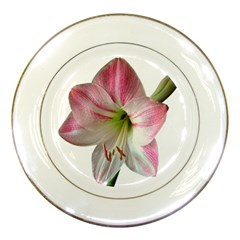 Flower Blossom Bloom Amaryllis Porcelain Plates