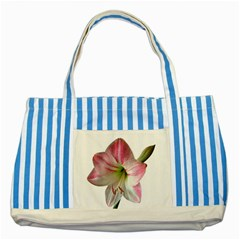Flower Blossom Bloom Amaryllis Striped Blue Tote Bag by Nexatart