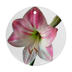 Flower Blossom Bloom Amaryllis Round Ornament (two Sides)