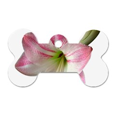 Flower Blossom Bloom Amaryllis Dog Tag Bone (two Sides) by Nexatart