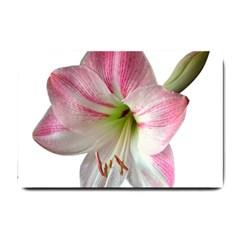 Flower Blossom Bloom Amaryllis Small Doormat  by Nexatart