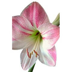 Flower Blossom Bloom Amaryllis 5.5  x 8.5  Notebooks by Nexatart