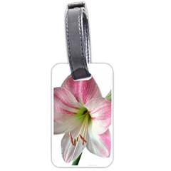 Flower Blossom Bloom Amaryllis Luggage Tags (one Side)  by Nexatart