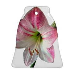 Flower Blossom Bloom Amaryllis Bell Ornament (two Sides)