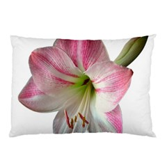Flower Blossom Bloom Amaryllis Pillow Case (two Sides)