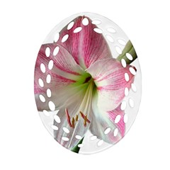 Flower Blossom Bloom Amaryllis Oval Filigree Ornament (two Sides)