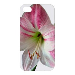 Flower Blossom Bloom Amaryllis Apple Iphone 4/4s Hardshell Case by Nexatart