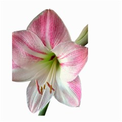 Flower Blossom Bloom Amaryllis Small Garden Flag (two Sides) by Nexatart