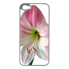 Flower Blossom Bloom Amaryllis Apple Iphone 5 Case (silver) by Nexatart