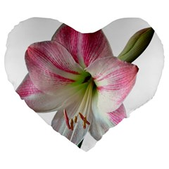 Flower Blossom Bloom Amaryllis Large 19  Premium Heart Shape Cushions by Nexatart