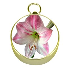 Flower Blossom Bloom Amaryllis Gold Compasses