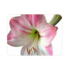 Flower Blossom Bloom Amaryllis Double Sided Flano Blanket (mini)  by Nexatart