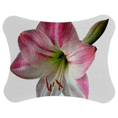 Flower Blossom Bloom Amaryllis Jigsaw Puzzle Photo Stand (bow)