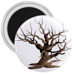 Tree Isolated Dead Plant Weathered 3  Magnets by Nexatart
