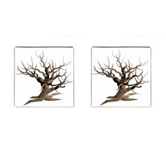 Tree Isolated Dead Plant Weathered Cufflinks (square)