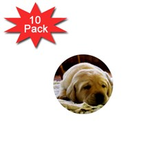 2 Puppy Yl 1  Mini Magnet (10 pack)  by TailWags