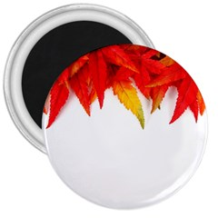 Abstract Autumn Background Bright 3  Magnets by Nexatart