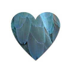 Feather Plumage Blue Parrot Heart Magnet by Nexatart